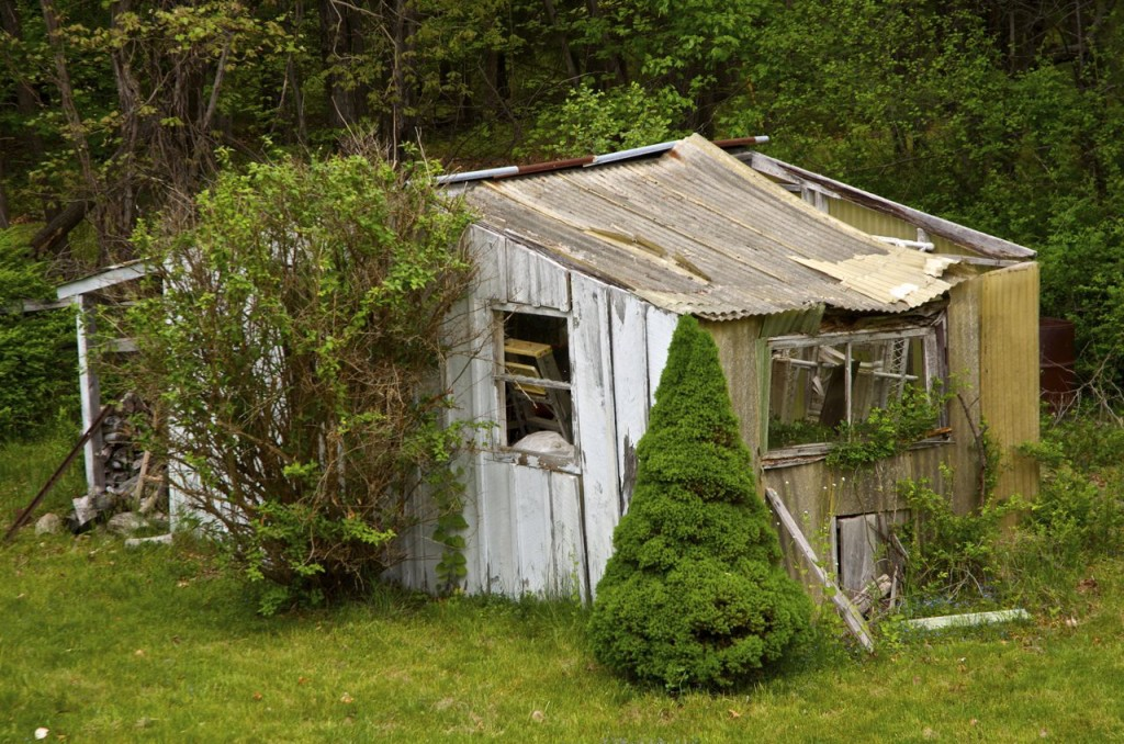 WOODSTOCK AND THE OLD SHED