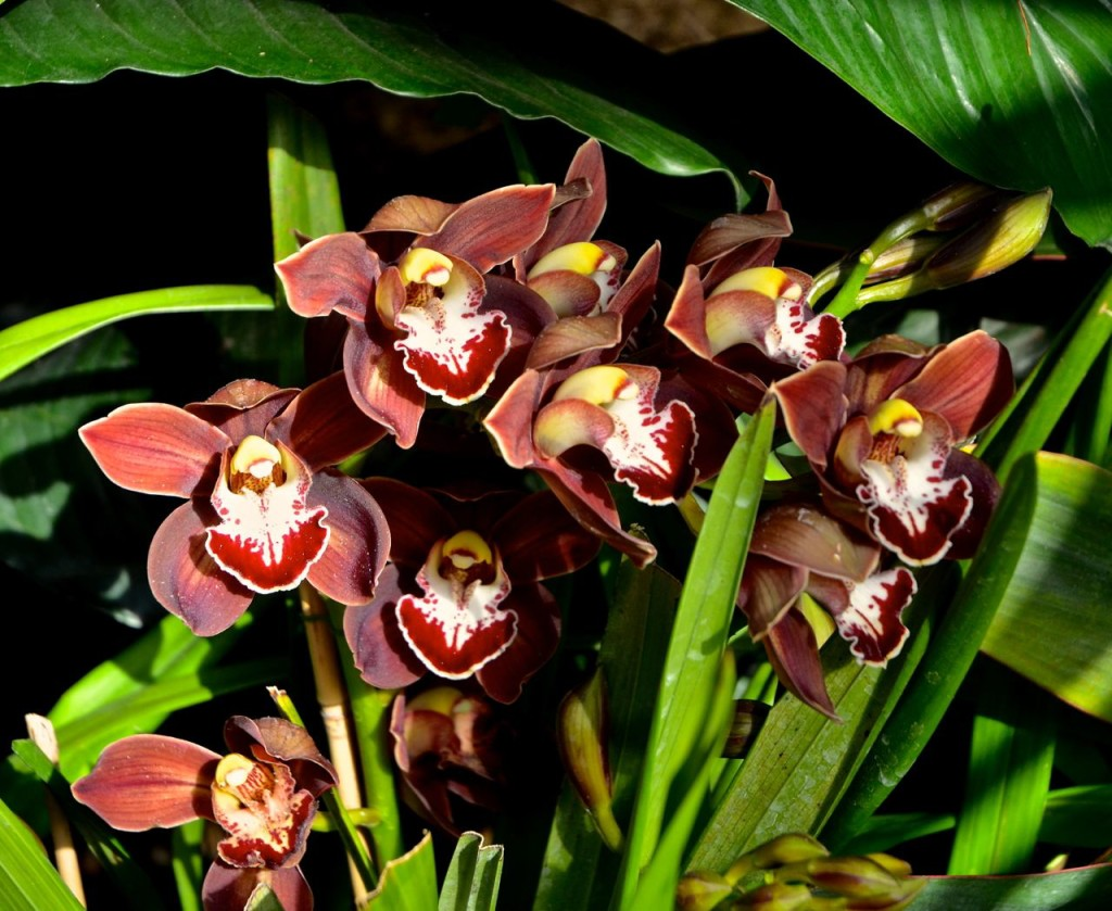 TODAY I BLOG ABOUT ORCHIDS